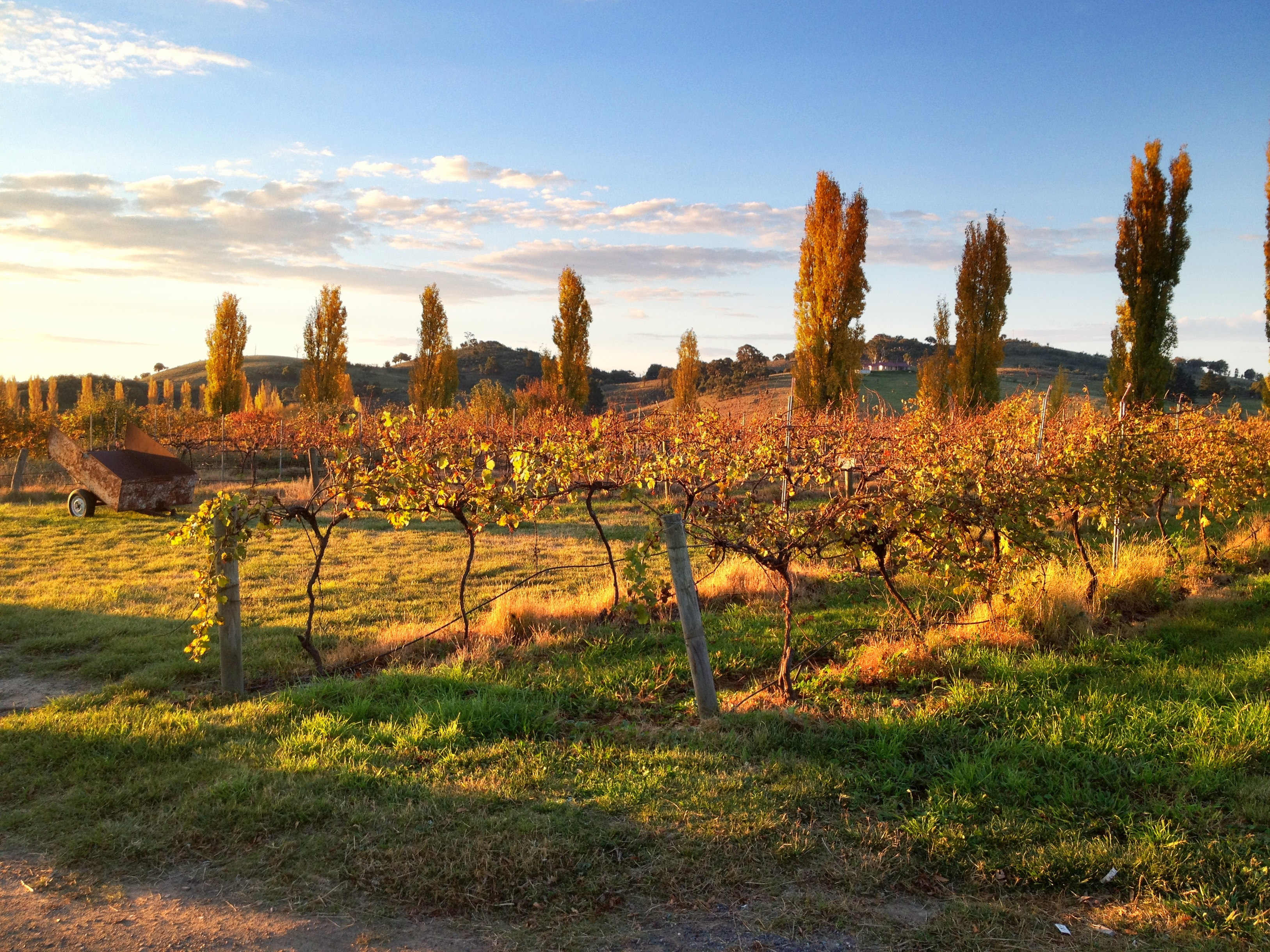 Canberra District - Helm Vineyards (1)