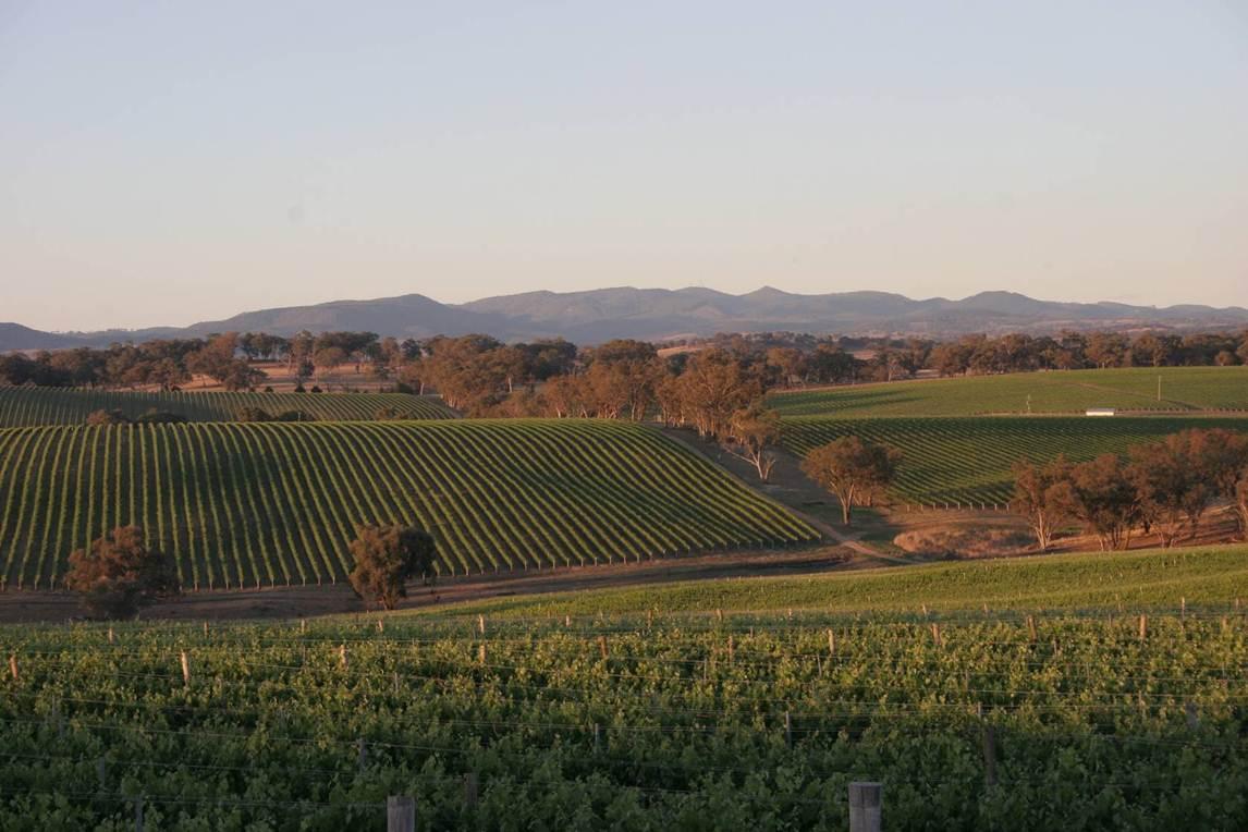 Orange - Vineyard Panorama
